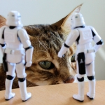 Stormtroopers 365 What Do You Want Cat By Stefan Le Du